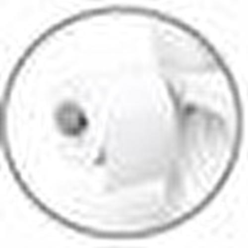 Bebek Tuvalet Eğitimi Lazımlık Klozet 18 Ay+ Beyaz
