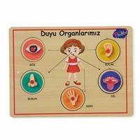 Wooden Handle Educational Puzzle Sensory Organs